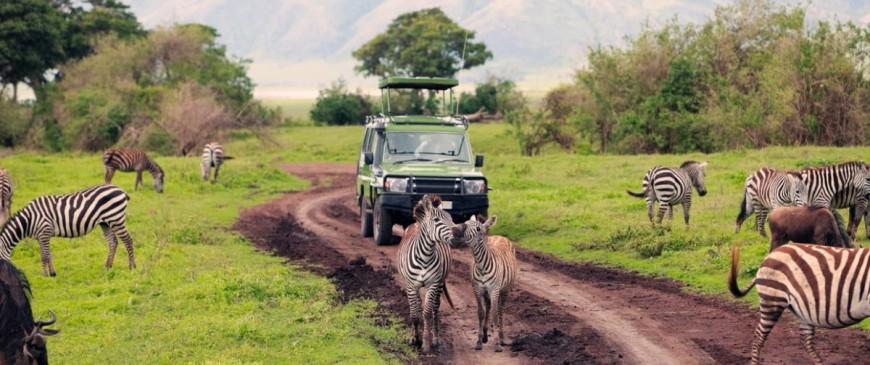Les choses qu'on ne vous dit pas sur votre premier safari en Afrique